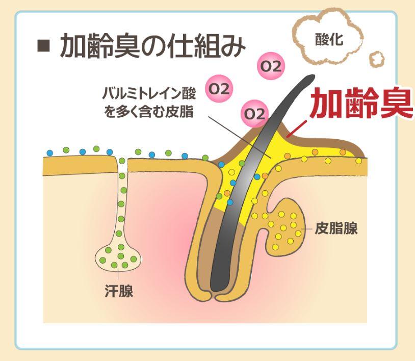 加齢臭の発生メカニズム(仕組み)